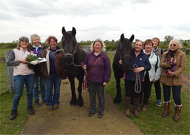 west midlands fell pony group equine acupuncture