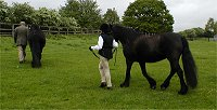 Midland West Fell Pony Area Support Group